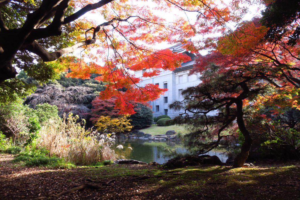 東京国立博物館庭園にあるお池