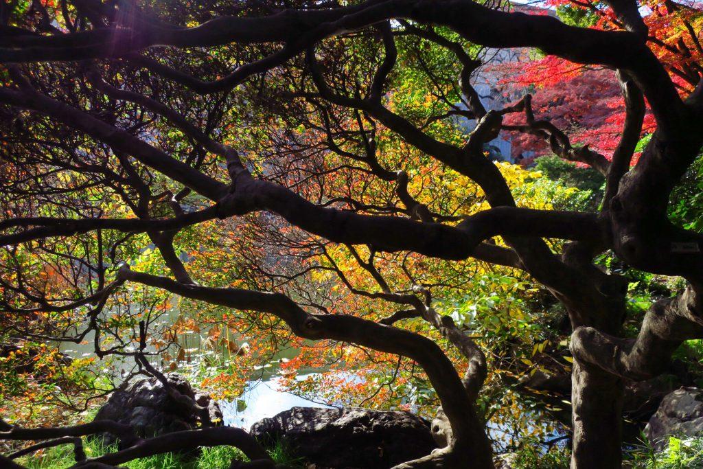 東京国立博物館の松