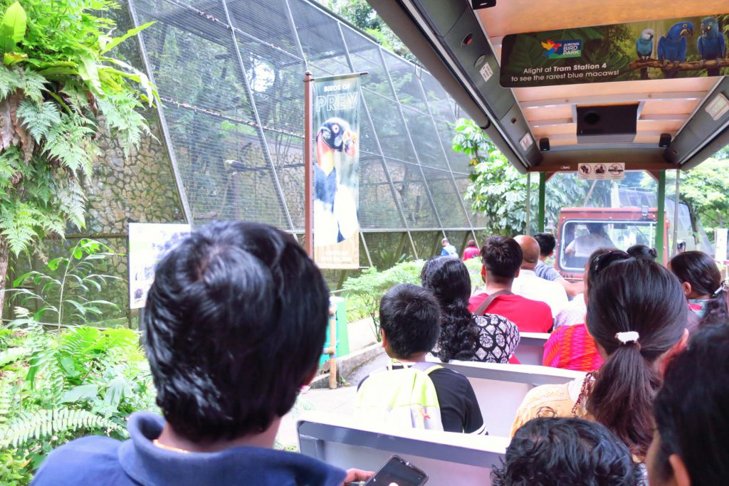 jurong bird park - tram ride