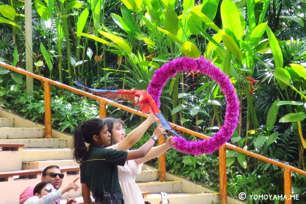 jurong bird park high flyers show