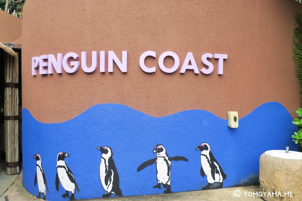 jurong bird park - penguin coast