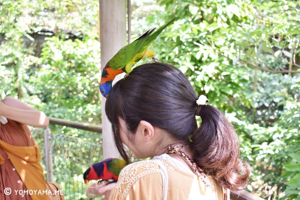 jurong bird park lory loft