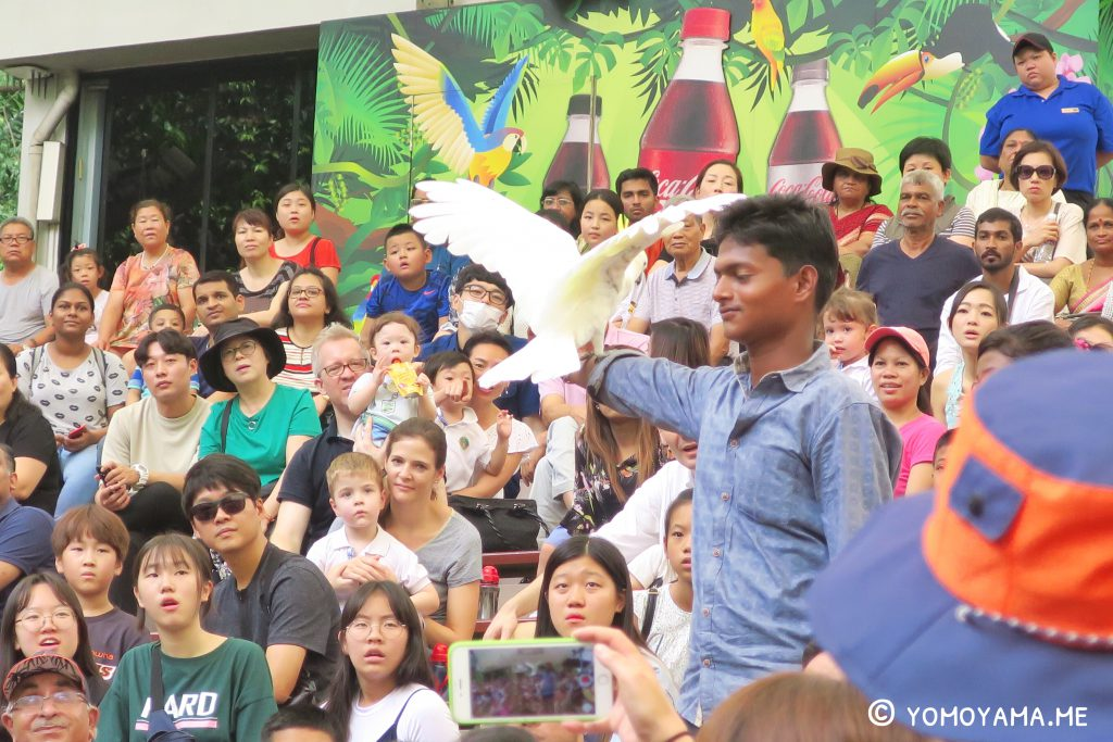 jurong bird park - high flyers show highlight