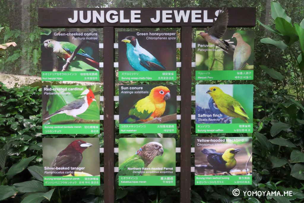 jurong bird park - jungle jewels