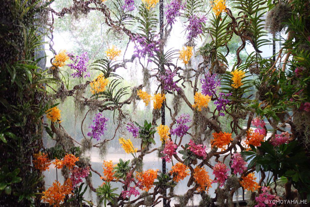 ワルツの蘭の壁紙